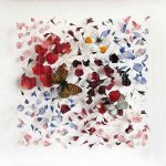 <b>Little Dreams XI</b>  |  rose petals, butterflies, nylon  |  31 x 31cm     <font color=&quot;#CC0000&quot;>sold</font>
